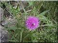 NJ5107 : Flora & Fauna by Stanley Howe