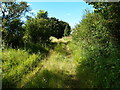 TL0736 : Green lane between Firs Farm and the Ampthill Road by Michael Trolove