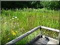 TQ7559 : The pond at Tyland barn by Marathon