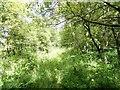 NZ1750 : Overgrown footpath by Robert Graham