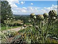 SE3203 : Formal Gardens in front of Wentworth Castle by Steve  Fareham