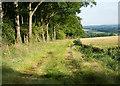 "SE8449 : Footpath alongside ""The Belt"" above Nunburnholme by Neil Oakes"
