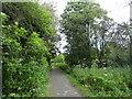 NZ2339 : Old railway walk at Brandon by Robert Graham