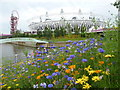 TQ3784 : Stratford: wild flowers in the Olympic Park by Chris Downer