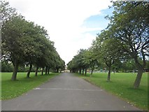 NZ2465 : Tree lined path, Exhibition Park by Graham Robson