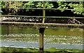 J2766 : Canal overspill. Lambeg (2) by Albert Bridge