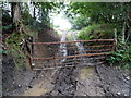 ST1896 : Muddy tracks into a field, Pontllanfraith by Jaggery