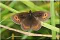 NH3937 : Scotch Argus (Erebia aethiops), Mauld, Strathglass by Mike Pennington