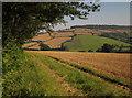 SX9279 : Harvested field by Oakpark Lane by Derek Harper