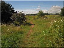 SX9066 : Grassland on former landfill, Barton by Derek Harper