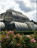 TQ1876 : Kew, Palm House from the Rose Garden by David Lally