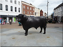 SO5140 : Hereford's High Town bull by Jeremy Bolwell