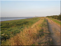 TA0623 : Evening sunlight by the Humber by Jonathan Thacker