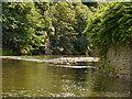 SD7606 : River Irwell, Ladyshore by David Dixon
