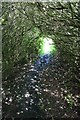 SK2474 : Rhododendron tunnel by Dave Dunford