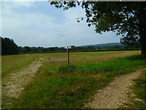 TQ0524 : Bridleway junction at Harsfold Hanger by Shazz