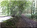 ST1103 : Path in Witness Moor and hedge bank by David Smith