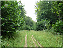 SU8113 : Track in Wildham Wood by Robin Webster