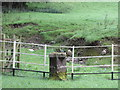 SD7051 : Boundary Stone, near Dunnow Lodge by David Rogers