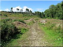 SE2968 : Track below Hum Hill by Chris Heaton