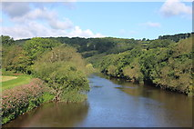SO2547 : The River Wye upstream from Whitney toll bridge by Roger Davies