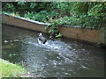 TQ2965 : Dog in the Wandle by Stephen Craven