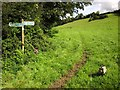 ST1800 : Electric fence across footpath, Honiton Hill by Derek Harper
