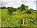 H6722 : Railway embankment, Drumgavny by Kenneth  Allen