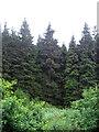 SE8495 : Pifelhead Wood  by JThomas
