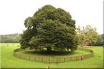 SK6464 : Rufford Park by Richard Croft