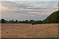 TQ4258 : Newly harvested field by Ian Capper