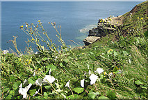 TA1281 : Clifftop vegetation by Pauline E