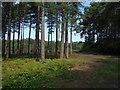 SU8968 : Bracknell Forest by Alan Hunt