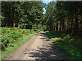 SU8967 : Woodland ride, Swinley Park by Alan Hunt