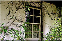 R4560 : Bunratty Folk Park - Site #7 - Shannon Farmhouse - Window with Lace Curtains by Suzanne Mischyshyn