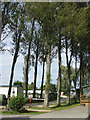 SE8081 : Tall trees at the caravan and camping site by Pauline E
