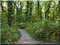 SJ6576 : Marbury Country Park by David Dixon