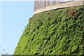 TQ3785 : Grass Wall by Oast House Archive