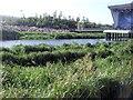 TQ3785 : Conservation area near River Lea by Paul Gillett