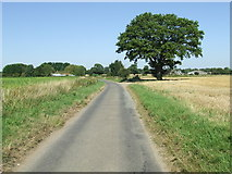 TM0981 : Tree On Darrow Lane by Keith Evans