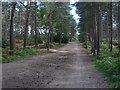 SU8765 : Bracknell Forest by Alan Hunt