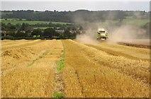 SJ9030 : Harvesting near Pirehill House by Derek Harper