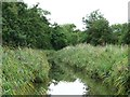 SO8560 : Reeds along the Droitwich Barge Canal by Christine Johnstone