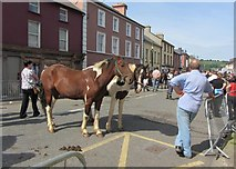 W9993 : Ponies at Tallow Horse Fair, Barrack Street, Tallow by ethics girl