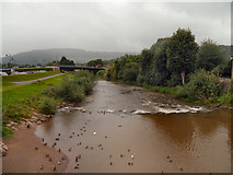 SO5012 : River Monnow, Monmouth by David Dixon