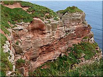 NT9955 : Red sandstone cliffs on the Berwickshire Coast by Walter Baxter
