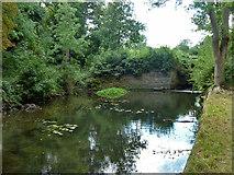 TQ1272 : River Crane below old sluice by Robin Webster