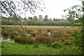 TQ0316 : Marshy area by the Wey South Path by N Chadwick