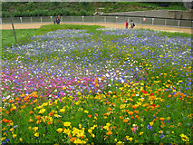 TQ3783 : Flower meadow beside the City Mill River, Olympic Park by Nick Smith