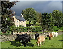 SK2572 : Small meadow by Over Lane, Baslow by Andrew Hill